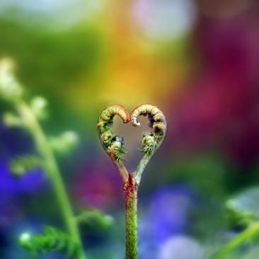 Para quem quer um amor especial